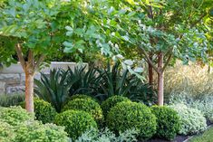 –Simply click the link for more small ornamental trees. Check the webpage to re… –Simply click the link for more small ornamental trees. Check the webpage to read more_ … Small Garden, Ornamental Trees, Plants, Shade Garden, Small Backyard Landscaping, Backyard Landscaping Designs, Native Garden, Garden Inspiration, Australian Garden