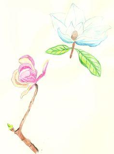 Aquarelle magnolia