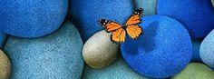 imagenes de portada para facebook de mariposas - Buscar con Google