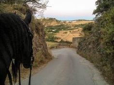 Alltag im Pensionsstall Switzerland, Country Roads, Blog, Andalusia