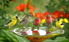 little bird pool <3