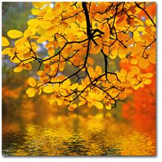 Gorgeous!  I love fall so much!  The colors are so warm and inviting!