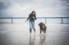 Beach season is open can't wait to go see our favorite place. Japanese Akita, American Akita, Akita Dog, English Mastiff, Dog Beach, Shiba Inu, Dog Owners, Dog Breeds, Labrador Retriever