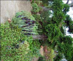 Succulent Garden Design Ideas: Lush Landscaping