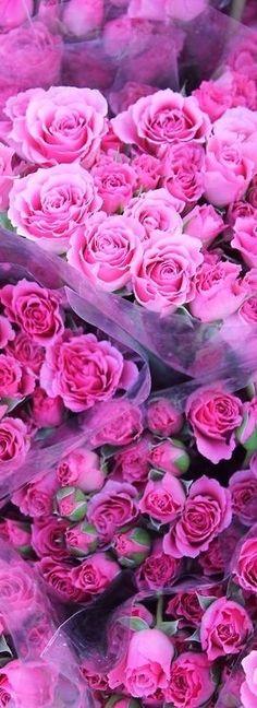 Roses Lover ♡ ✦ ❤️ ●❥❥●* ❤️ ॐ ☀️☀️☀️ ✿⊱✦★ ♥ ♡༺✿ ☾♡ ♥ ♫ La-la-la Bonne vie ♪ ♥❀ ♢♦ ♡ ❊ ** Have a Nice Day! ** ❊ ღ‿ ❀♥ ~ Wed 29th July 2015 ~ ❤♡༻ ☆༺❀ .•` ✿⊱ ♡༻ ღ☀ᴀ ρᴇᴀcᴇғυʟ ρᴀʀᴀᴅısᴇ¸.•` ✿⊱╮