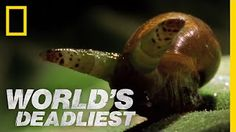 Army Ants Eat Everything | World's Deadliest - YouTube