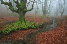 The legend of the fog. by Raquel de Castro on 500px