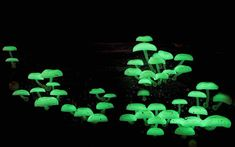 21 Amazing Types of Mushrooms Photographed By Steve Axford
