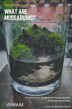 Water Terrarium, Terrarium Plants, Succulent Terrarium, Indoor Water Garden, Indoor Plants, Mini Plants, Moss Garden, Garden Plants, Paludarium
