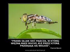 """"""" #Prawa są jak sieć pajęcza, w której więzną małe muchy, ale przez którą przebijają się wielkie"""". Francis Bacon"""