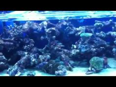 Reef display video 2 at majestic aquariums