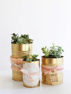 Suculentas em latas douradas