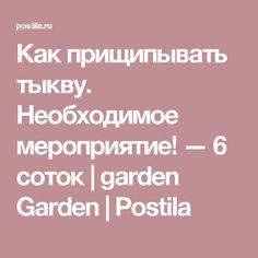 Как прищипывать тыкву. Необходимое мероприятие! — 6 соток | garden Garden | Postila