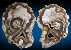 Photographs of mineral No. Agate pseudomorphs after Coral (Tampa Bay Coral) from Tampa Bay, Hillsborough County, Florida Crystals Minerals, Rocks And Minerals, Celebration Quotes, Agates, Funny Design, Tampa Bay, Quartz Crystal, Tattoo Quotes, Coral