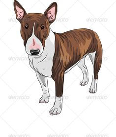 Vector Cartoon Brown and Tan Bull Terrier Dog  #GraphicRiver         Color sketch of Excellent Bull Terrier Dog in brown and tan isolated on the white background. Fully editable, vector objects are grouped on separate layers. EPS 8 plus high-quality Jpeg. No gradients, no transparency, no blends, no meshes.  	         	      Created: 16December12 GraphicsFilesIncluded: JPGImage #VectorEPS Layered: Yes MinimumAdobeCSVersion: CS Tags: BullTerrier #animal #beautiful #black #breed #brown…