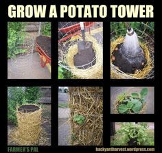 Grow Potatoes in a Tower | Compost Rules.