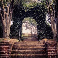 Ivy-covered archway in the #Natchez City #Cemetery. #historic www.visitnatchez.org