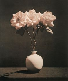 Robert Mapplethorpe – Pink Roses, 1983.