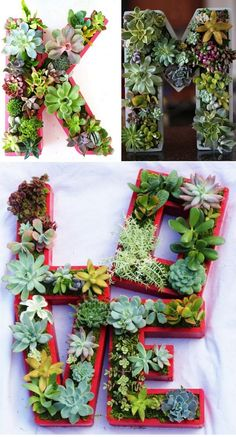 mais. Succulent Gardening, Cacti And Succulents, Planting Succulents, Succulent Planters, Cactus Decor, Plant Decor, Suculentas Interior, Succulent Display, Hens And Chicks