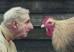 David Stewart: Hugh and Chicken