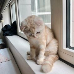 Cute Animal Memes, Funny Animal Photos, Baby Animals Pictures, Cute Funny Animals, Animals And Pets, Funny Cats, Cute Cats And Kittens, Kittens Cutest, Cat Sitter