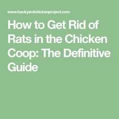 How to Get Rid of Rats in the Chicken Coop: The Definitive Guide