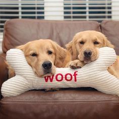 We woof you! ❤️🐾 We're staying in tonight. What are you guys up to?