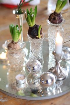 -bulb forcing...especially during the weary months of winter will bring some spring time into the house.