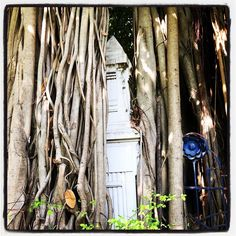 The roots of the Banyan tree go everywhere! #tourism #staycurious #passion #neverstopexploring #explore #experience #thailand #thai #bangkok #instabangkok #bangkokphotographer #trees #tree #nature #park #parks #travel #travelgram #traveling #travelling #traveller #instatravel #instatrip #roots #banyan #banyantree #travelphotography #staycurious #neverstopexploring #wanderlust @cooltravelhacks #cooltravel by khiritravel