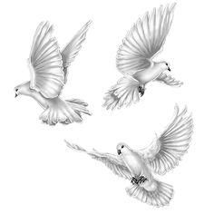 illustrations . commissions