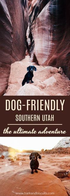 Spectacular dog-friendly hikes in Southern Utah. Add this to your list of places to visit with your pup!