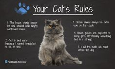 Your Cats Rules Cats Rules Cute Funny
