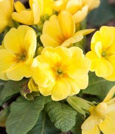 Fleurs qui ne gele pas - Plantes qui ne craignent pas le gel ...