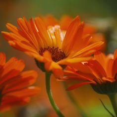 deep orange by *FeenoGraphie on deviantART