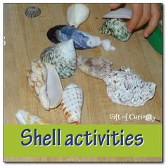 Shell activities for kids: learning about shells, learning with shells - Gift of Curiosity