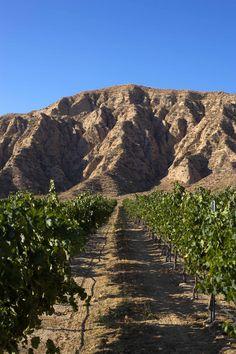 Was my favorite in SLO Laetitia Vineyard & Winery - San Luis Obispo