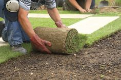 Laying sod isn't technically difficult, but it's backbreaking work that could save some homeowners thousands of dollars in their quest for a new lawn.