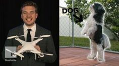 awesome Man invents tsunami sensor, web obsesses over his canine