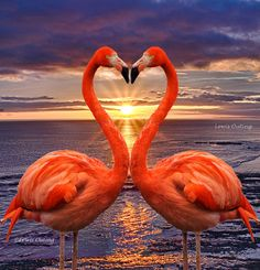 Kissing flamingos Poster Home Decor Wall Art Print, Gift for her, gift for him Pretty Birds, Love Birds, Beautiful Birds, Animals Beautiful, Cute Animals, Flamingo Wallpaper, Flamingo Art, Pink Flamingos, Exotic Birds