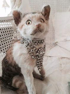 Vintage Taxidermy cat puppyHouse cat Katze von Chambredecoeur