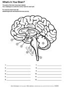 Ask A Biologist, Coloring Page, What's In Your Brain? Worksheet