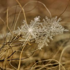 Macro Snow Flakes by Andrew Osokin Agonistica Cult of Photography