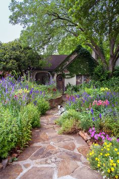 The 10 Most Charming Homes in Dallas - D Magazine Lawn And Garden, Home And Garden, Dallas Real Estate, Cottage Style Homes, Side Yards, Landscape Architecture, Garden Design, Sidewalk, Backyard