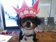 Gizzy is the furry mascot for our Cleveland TN locations!