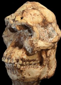 A skeleton named Little Foot is among the oldest hominid skeletons ever dated at 3.67 million years old, according to an advanced dating method. Little Foot is a rare, nearly complete skeleton of Australopithecus first discovered 21 years ago in a cave at Sterkfontein, in central South Africa. Stone tools found at a different level of the Sterkfontein cave also were dated at 2.18 million years old, making them among the oldest known stone tools in South Africa.