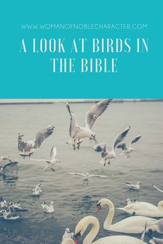 Matthew A look at Birds in the Bible Birds in the Bible. A look at the symbolism of birds in His Word. Doves and sparrows in Scripture and their meaning with verses.