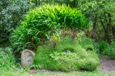 """The Lost Gardens of Heligan in Cornwall, is one of the most popular botanical gardens in the UK"