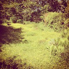 De tuin een tijdje niet gemaaid #vinkeveen Photo by welmoetb