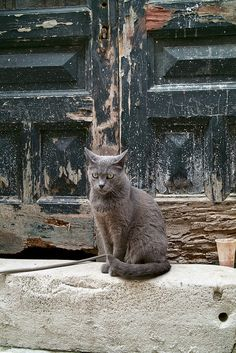 Dubrovnik street cat by Octanou on Flickr.
