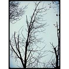 """""""#trees #sky #forest #forestpreserve #desplaines #suburbs #Chicago #nature #plant #branches #wigs #botany #wood #noleaves #fall"""" Photo taken by @akaaki157 on Instagram, pinned via the InstaPin iOS App! http://www.instapinapp.com (10/25/2015)"""